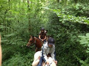 Promenade à cheval dans le Tarn